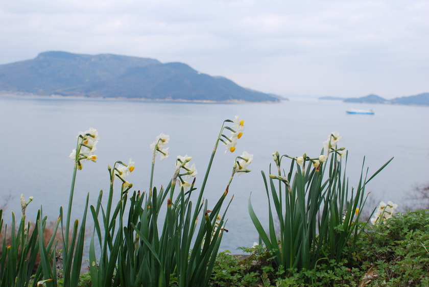 The daffodil colony is filled with salty air and the sweet scent of daffodils