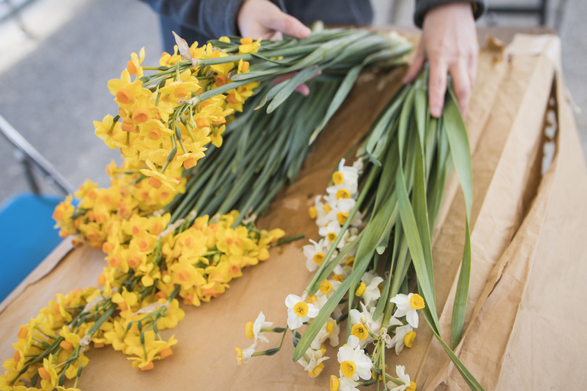 daffodils from Ogijima island are available as souvenirs