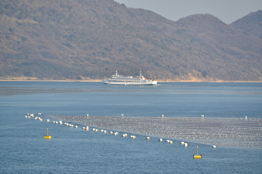 They are rafts for aquafarming, used for farming nori.
