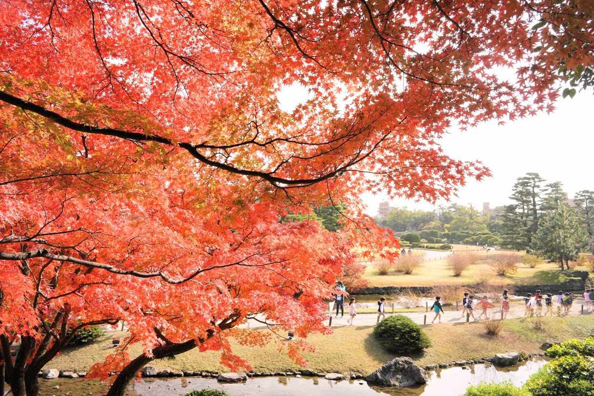Essential autumn spots in Takamatsu! The top five must-see